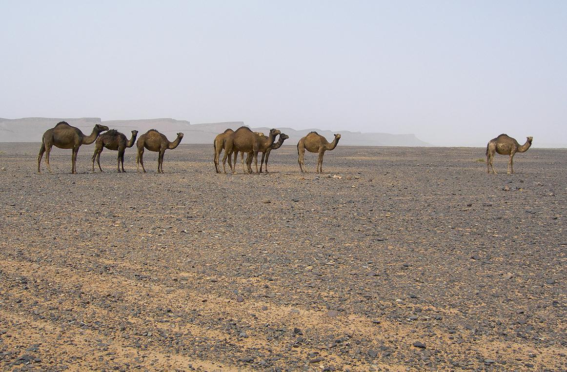 Maroc_MA15CL