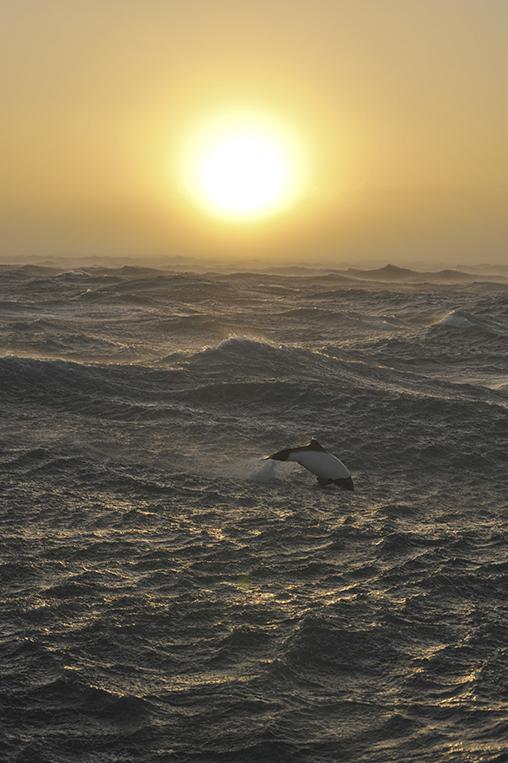 Okeanos_OK11CL