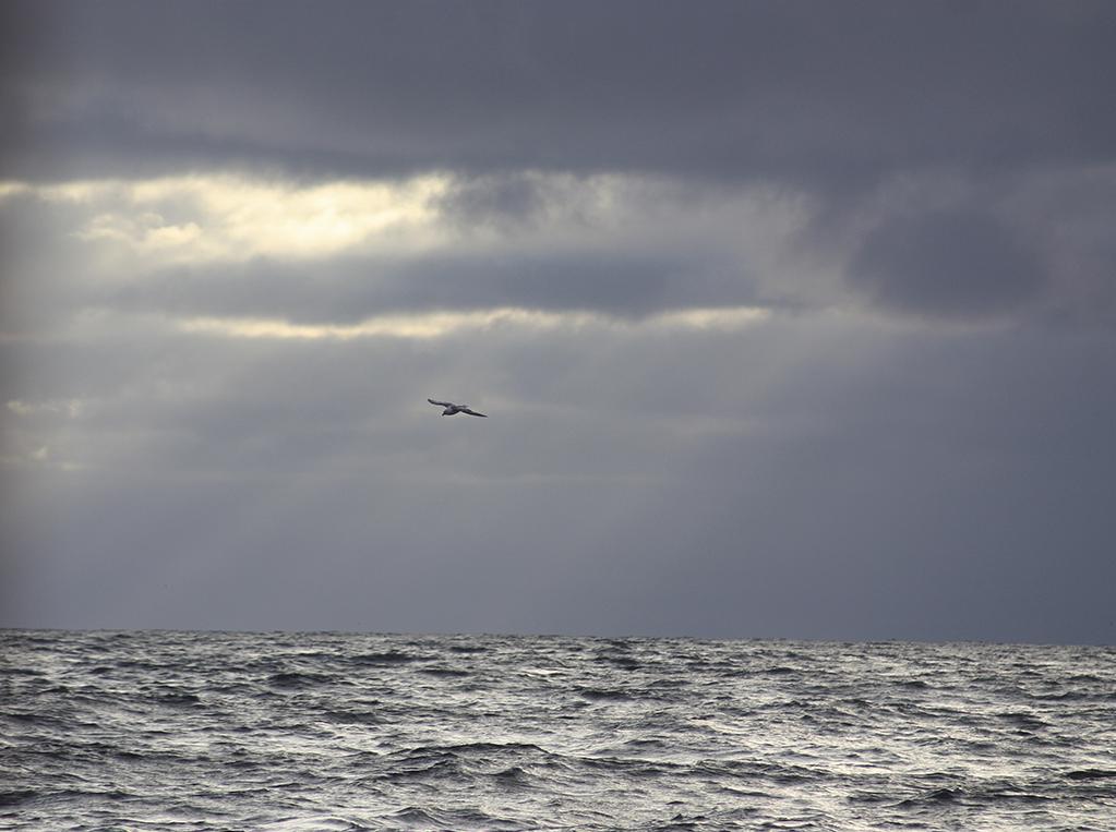 Okeanos_OK16CL