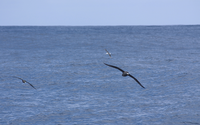 Okeanos_OK18CL