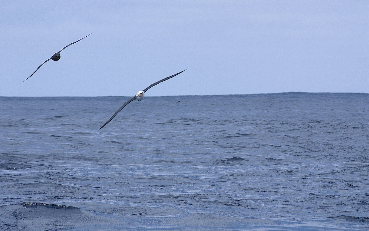 Okeanos_OK19CL