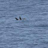Okeanos_OK22CL